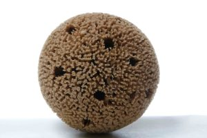 Honeycomb Mediterranean Sea Sponge (Natural Color)