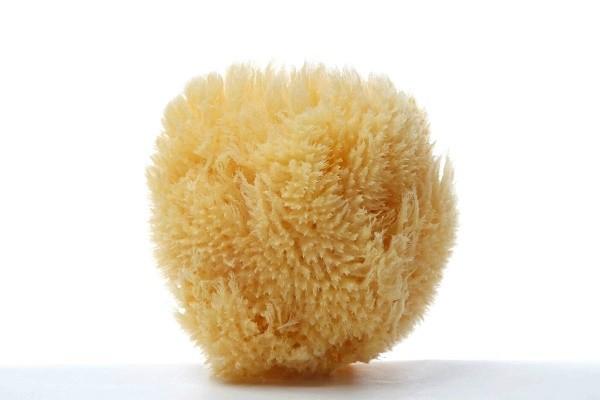 Grass Caribbean Sea Sponge
