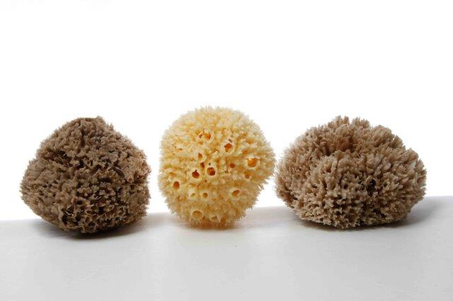 Wool Caribbean Sea Sponge