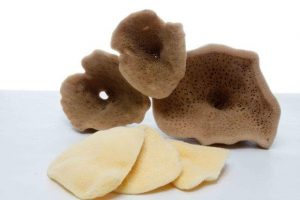Elephant Ear Mediterranean Sea Sponge | Spongean