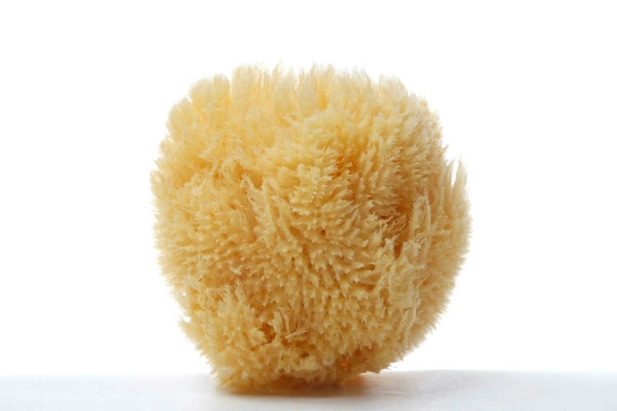 Grass Caribbean Sea Sponge (bleached or natural color - available in a wide size range)