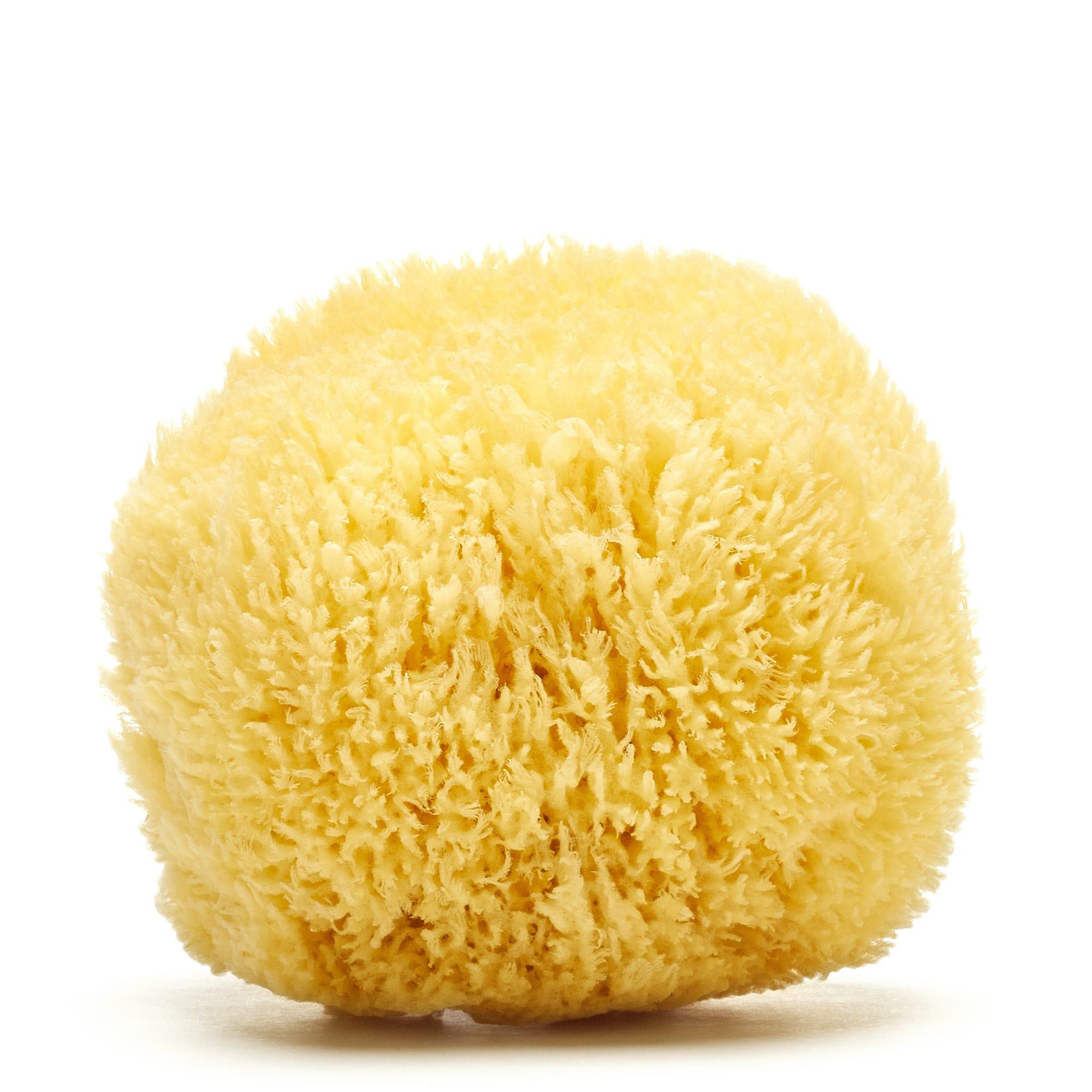 Grass Caribbean sponge (Bleached)