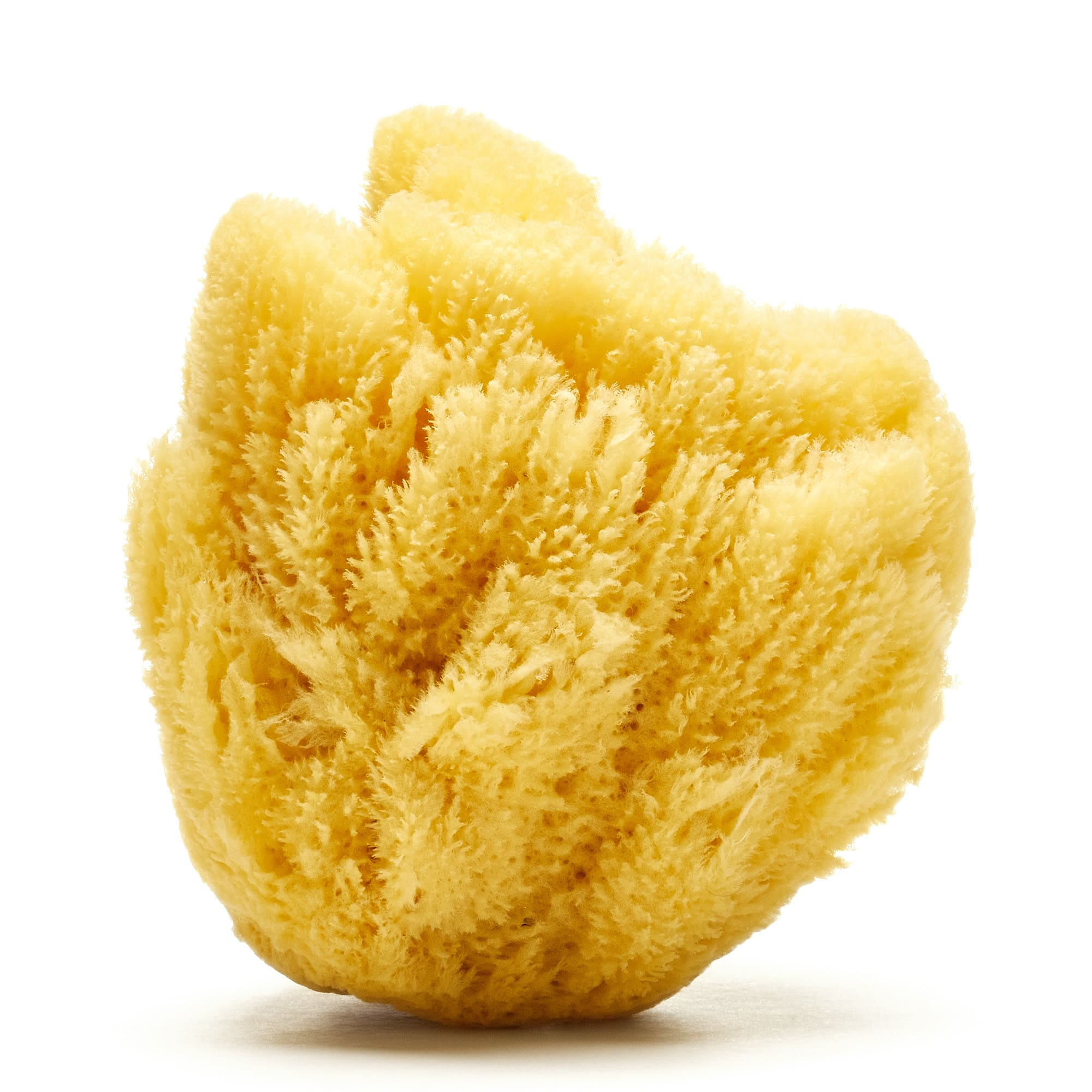 Grass Caribbean sponge (Bleached) 2