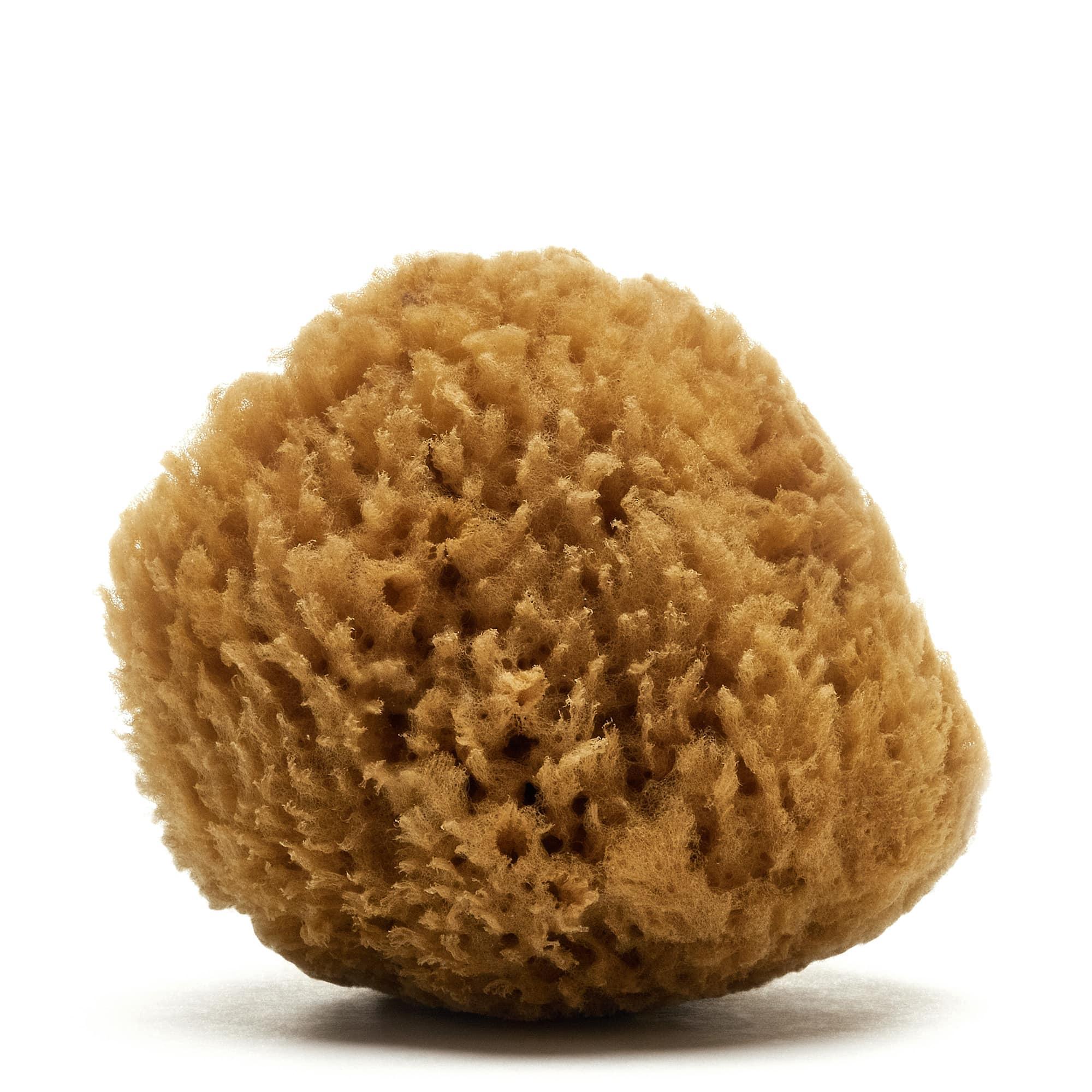 Grass Caribbean sponge (Natural color)