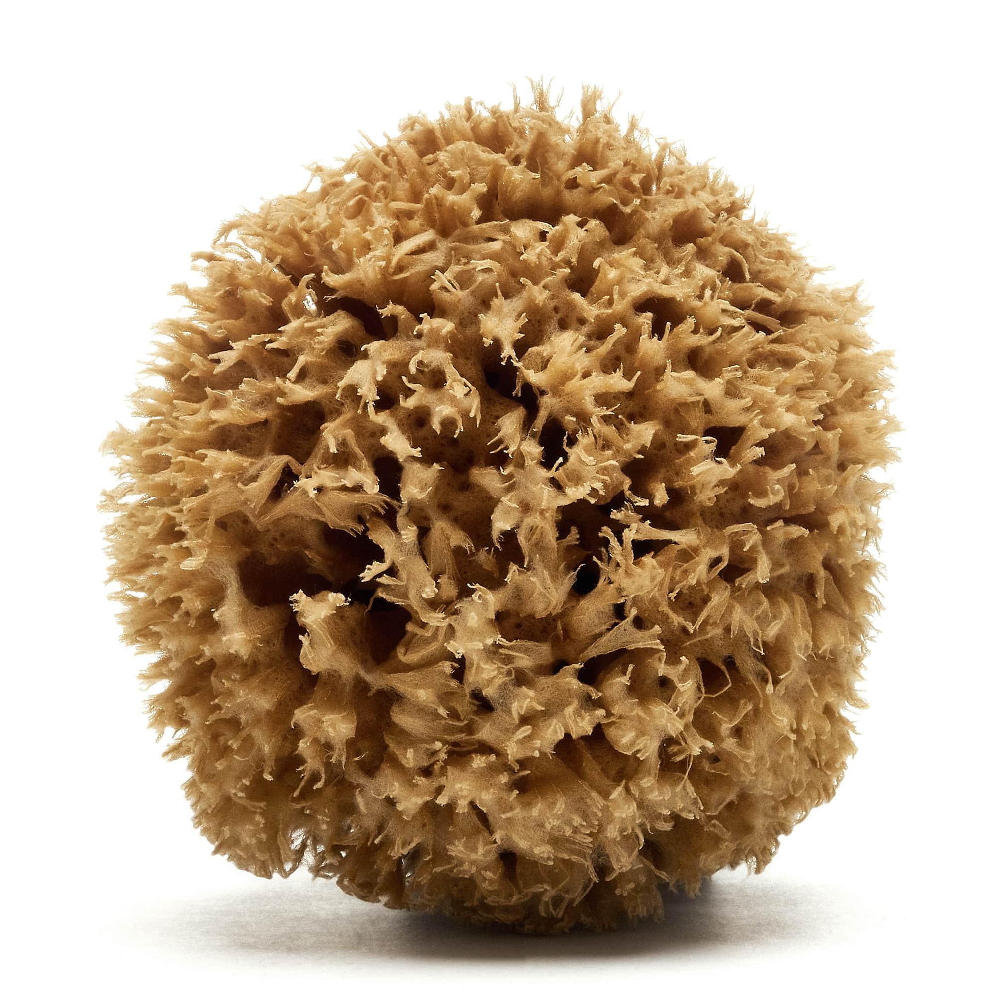 Honeycomb Greek sponge (Natural color)
