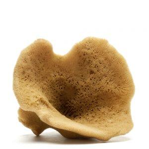Elephant ear sponge (Natural Color)