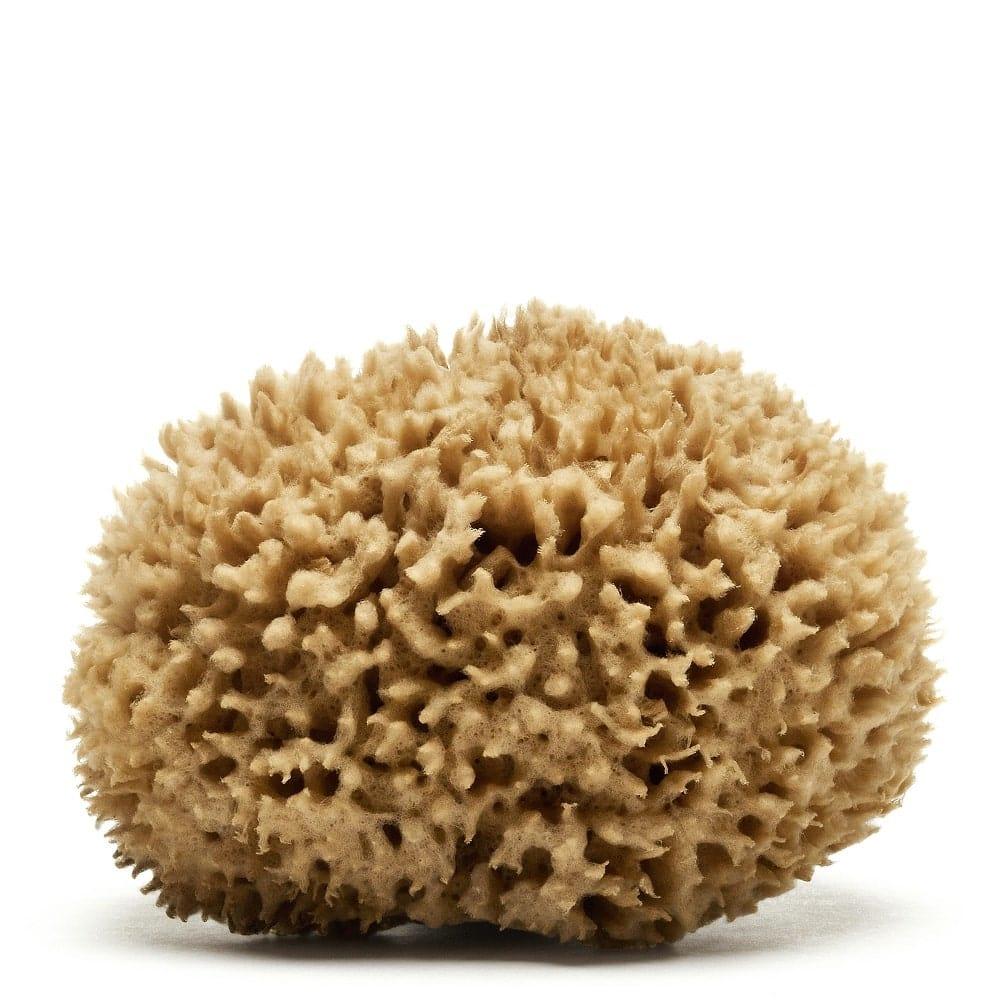 Caribbean Wool Sea Sponge (natural color) | Spongean