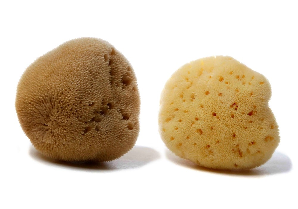 Silk Fine Mediterranean sea sponge (natural color & bleached)