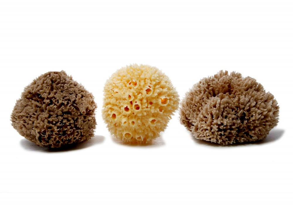 Wool Caribbean Sea Sponge (bleached or natural color - available in a wide size range)