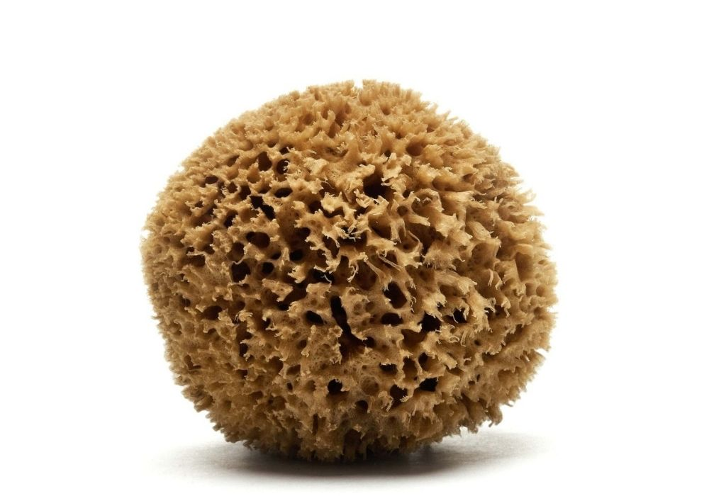 Honeycomb Top Quality Mediterranean sea sponge (bleached & natural color, available in a wide size range)